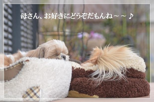 DSC_1187_01_20110310165800.jpg
