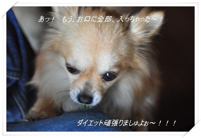 DSC_1281_01_20110418200922.jpg