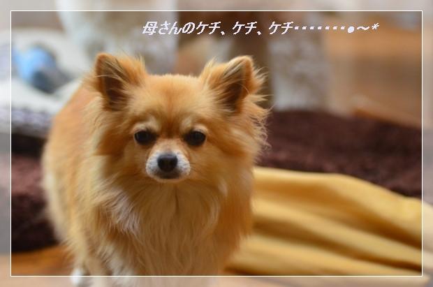 DSC_1592_01_20110528142349.jpg