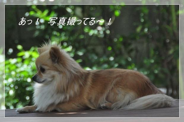 DSC_1625_01_20110514130925.jpg
