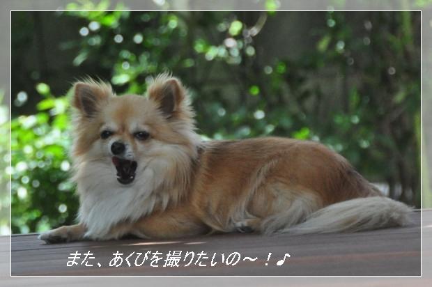 DSC_1627_01_20110514131105.jpg