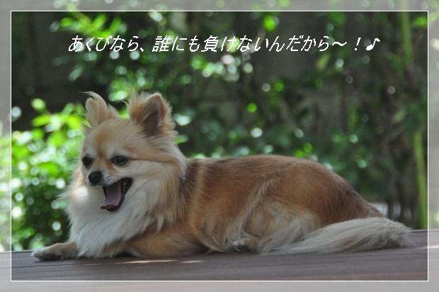 DSC_1628_01.jpg