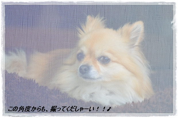 DSC_1736_01_20110528150218.jpg