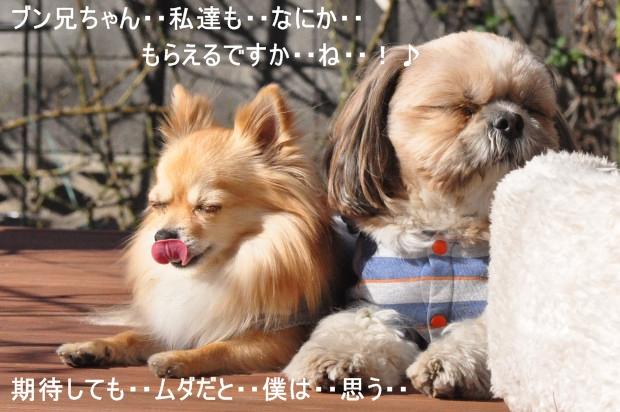 DSC_1885_01_20110108114142.jpg
