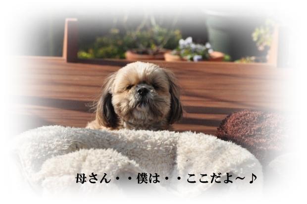 DSC_2460_01.jpg