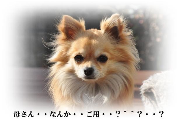 DSC_2483_01.jpg