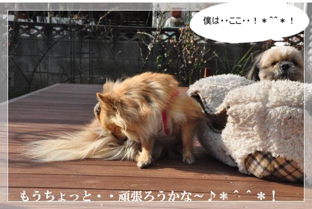 DSC_2485_01.jpg