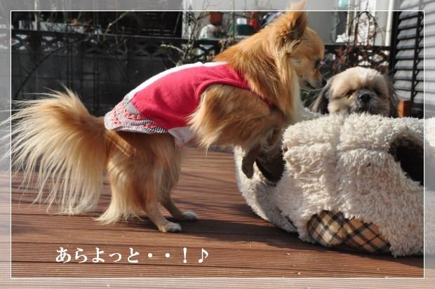 DSC_2489_01.jpg