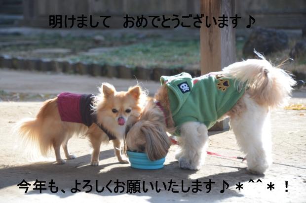 DSC_5114_01.jpg