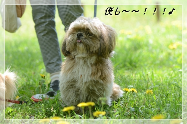 DSC_5626_01.jpg