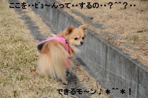 DSC_6178_01.jpg