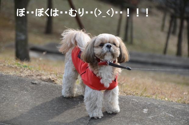 DSC_6179_01.jpg