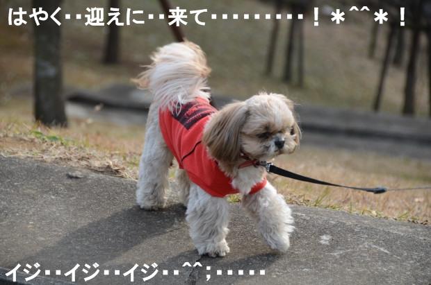 DSC_6185_01.jpg