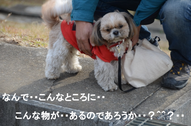 DSC_6192_01.jpg