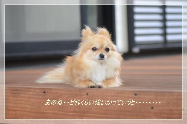 DSC_6257_01.jpg