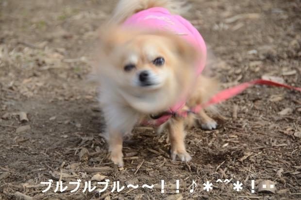 DSC_6261_01.jpg