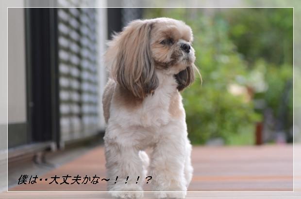 DSC_6269_01.jpg