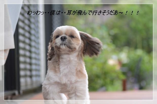 DSC_6276_01.jpg