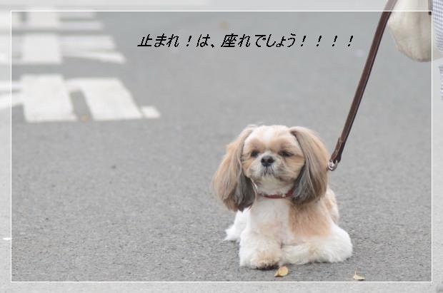 DSC_6316_01.jpg