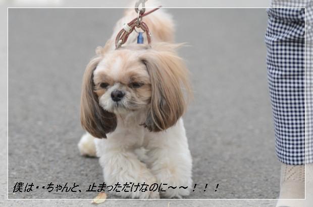 DSC_6318_01.jpg