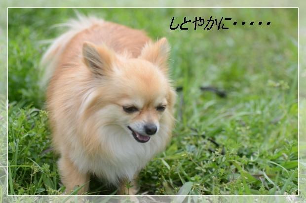 DSC_6553_01.jpg
