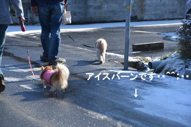 DSC_6849_01.jpg