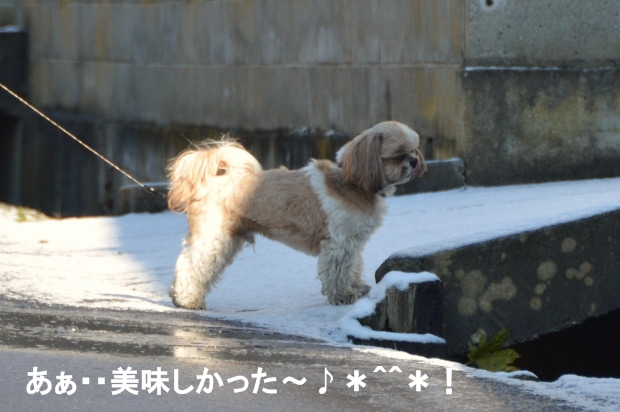 DSC_6859_01.jpg