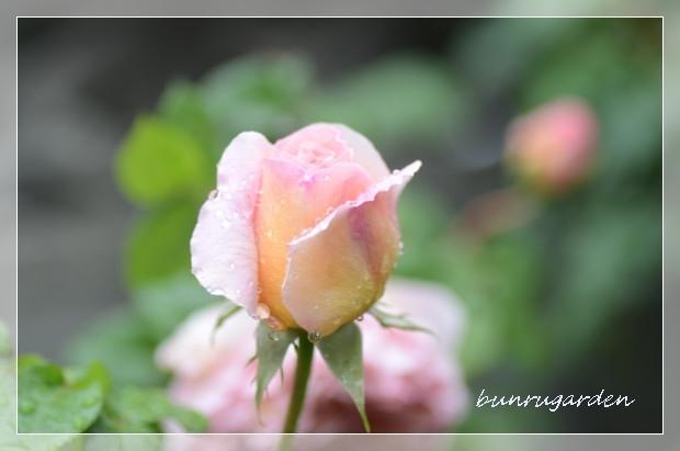 DSC_7820_01.jpg