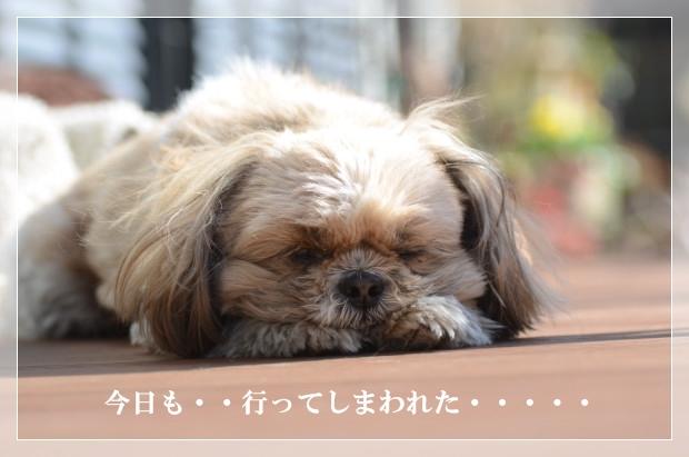 DSC_7921_01.jpg