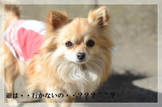 DSC_7923_01.jpg
