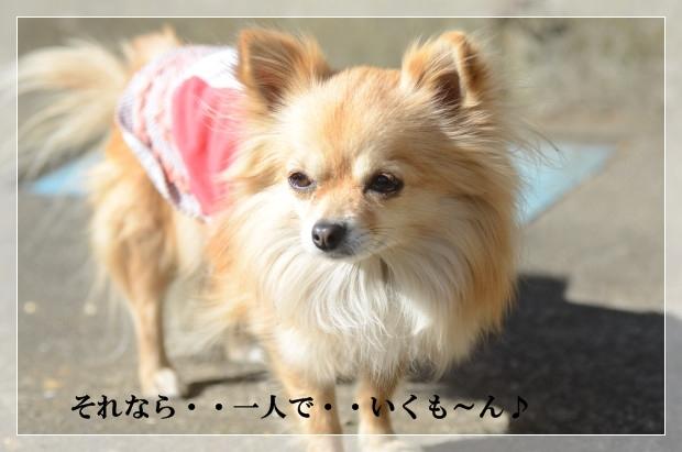 DSC_7927_01.jpg