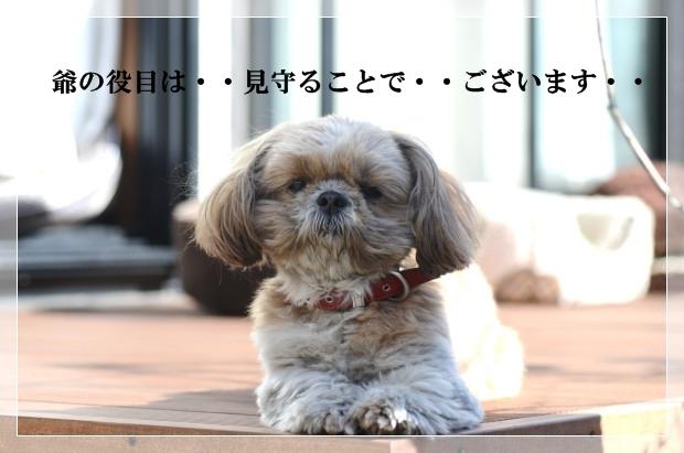 DSC_7961_01.jpg