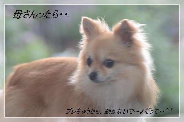DSC_7974_01.jpg