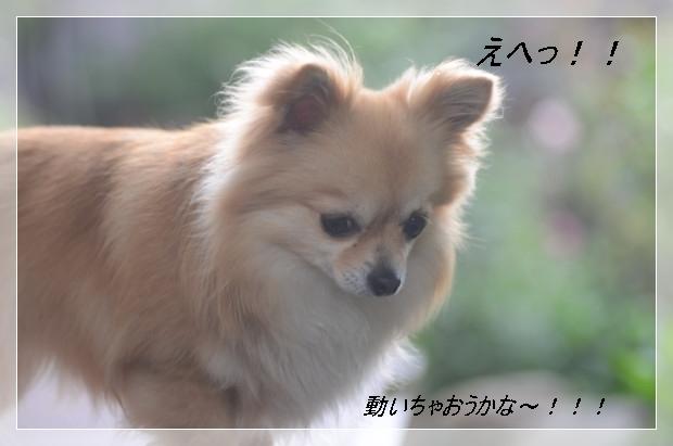 DSC_7975_01_20110512201641.jpg