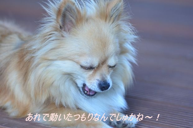 DSC_8361_01.jpg