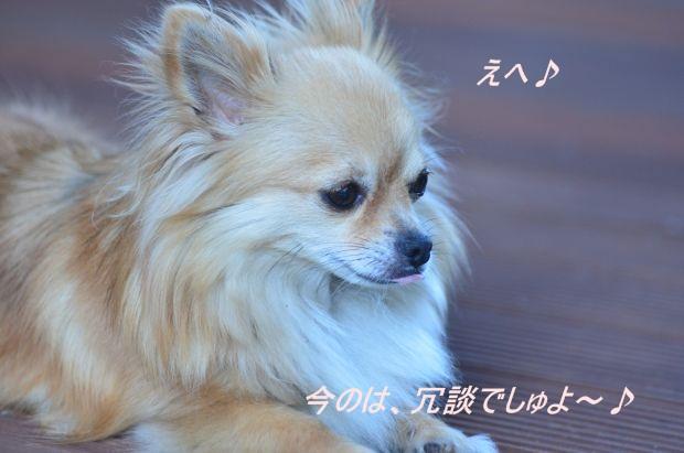DSC_8364_01.jpg