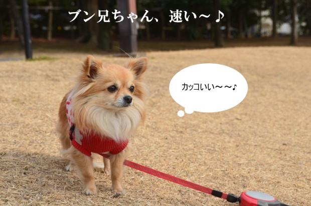 DSC_8570_01.jpg
