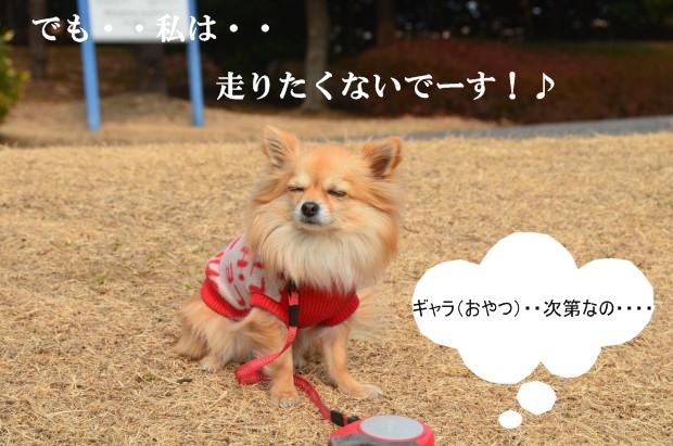 DSC_8586_01.jpg