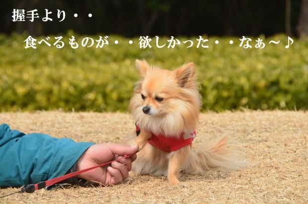 DSC_8590_01.jpg
