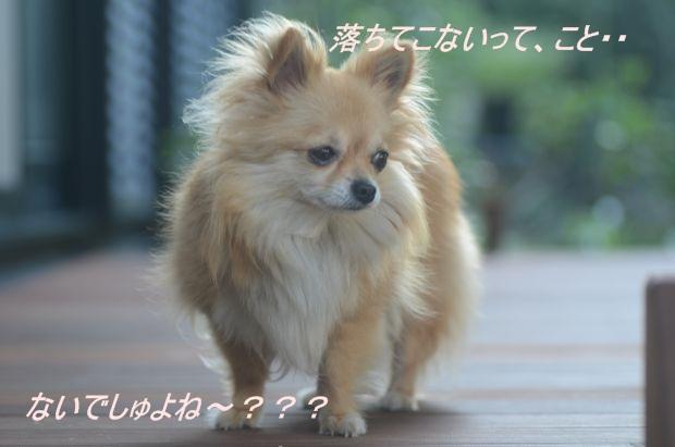 DSC_8652_01.jpg