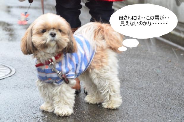 DSC_8875_01.jpg