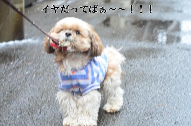 DSC_8887_01.jpg