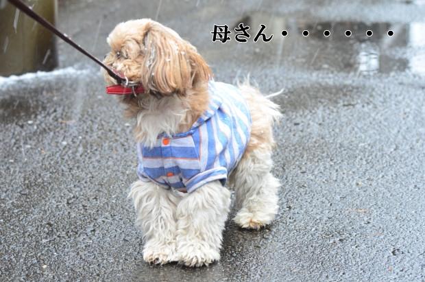 DSC_8888_01.jpg