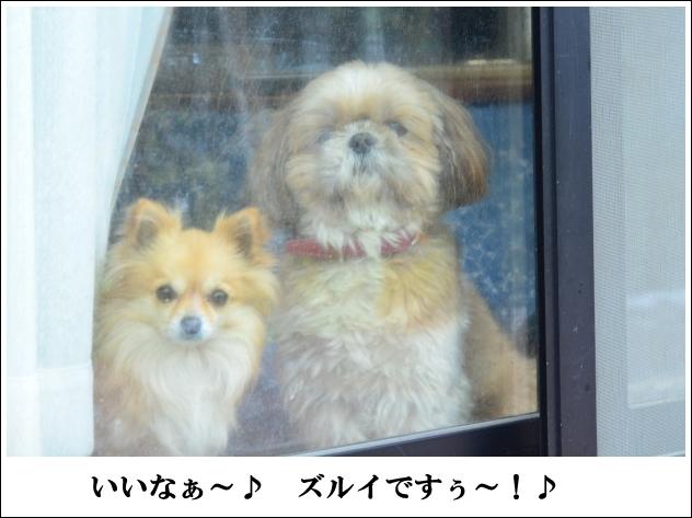 DSC_8940_01.jpg