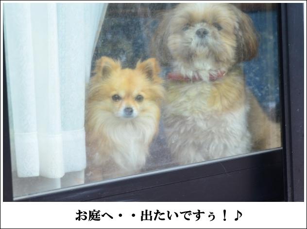 DSC_8944_01.jpg