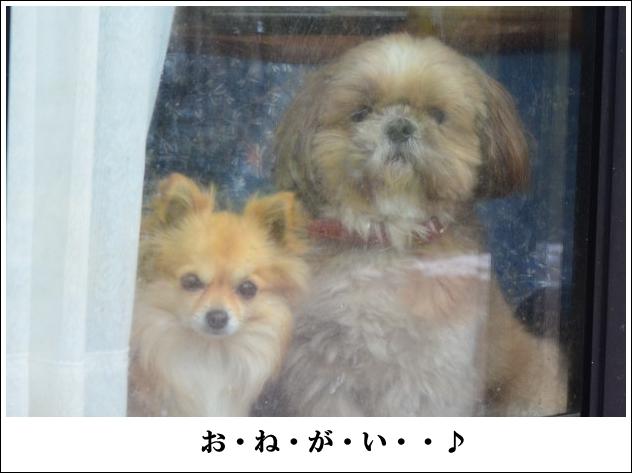 DSC_9007_01.jpg