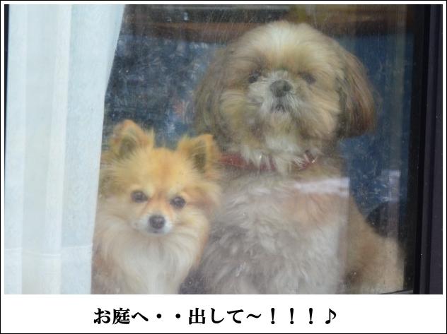 DSC_9008_01.jpg