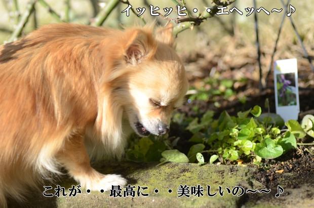 DSC_9145_01.jpg