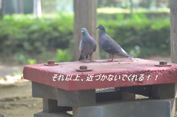 DSC_9406_01_20110718110852.jpg
