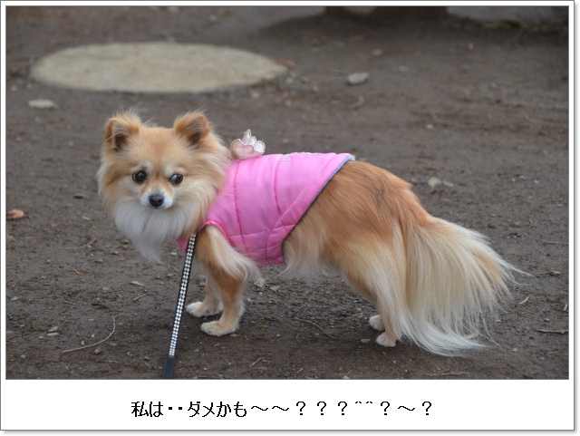 DSC_9778_01.jpg